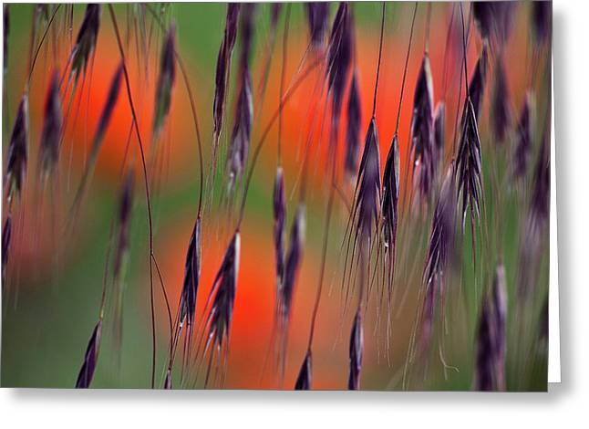 Heiko Koehrer-wagner Greeting Cards - In the Meadow Greeting Card by Heiko Koehrer-Wagner