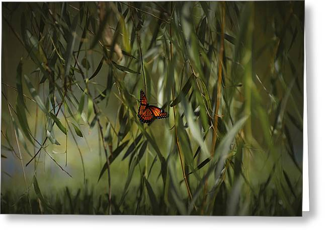 Mario Celzner Greeting Cards - in the memory of Papillon Greeting Card by Mario Celzner