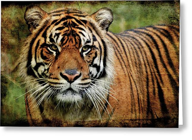 Bobcats Greeting Cards - In The Midst Of A Tiger Greeting Card by Athena Mckinzie