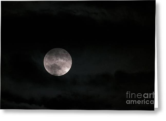 Moonglow Greeting Cards - In the Night Sky 5a Greeting Card by Sharon  Talson