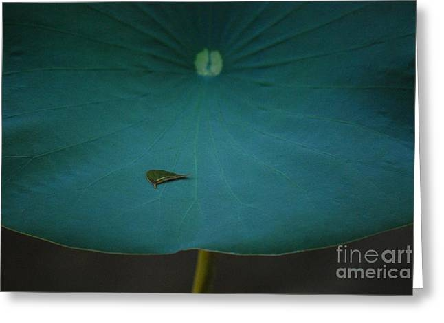 Lilly Pad Greeting Cards - In the Palm of His Hand Number One Greeting Card by Heather Kirk
