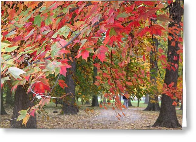 Photographs With Red. Photographs Greeting Cards - In the Park Greeting Card by Ann Willmore