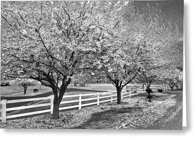 Fencing Greeting Cards - In The Park Greeting Card by Debra and Dave Vanderlaan