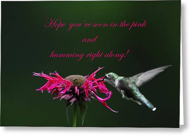 Get Well Card Framed Prints Greeting Cards - In the Pink and Hummin along Greeting Card by Randall Branham