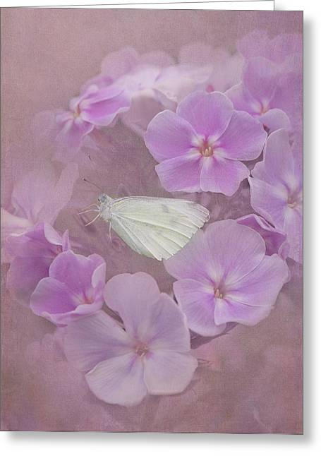 Cabbage White Butterfly Greeting Cards - In The Pink Greeting Card by Angie Vogel