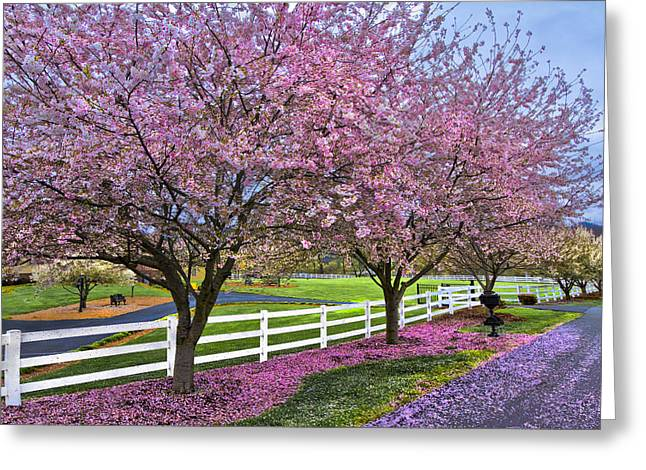 Fencing Greeting Cards - In The Pink Greeting Card by Debra and Dave Vanderlaan