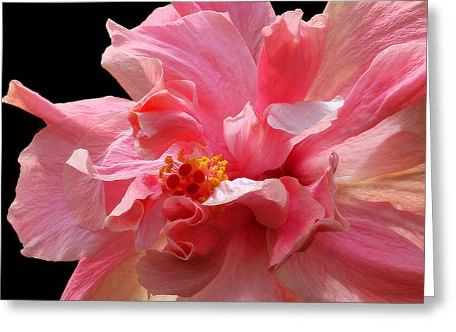 Stigma Greeting Cards - In The Pink Greeting Card by HH Photography