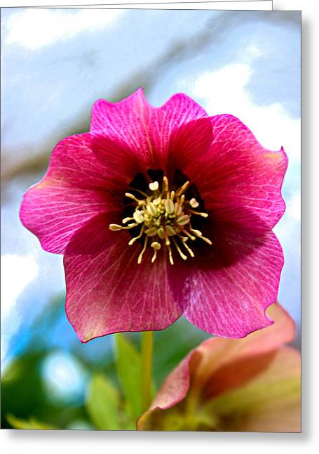Macro Photography Photographs Greeting Cards - In The Pink Greeting Card by Martin Newman