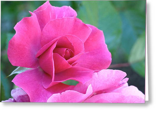 Pink Floral Greeting Cards - In the Pink Greeting Card by Rona Black