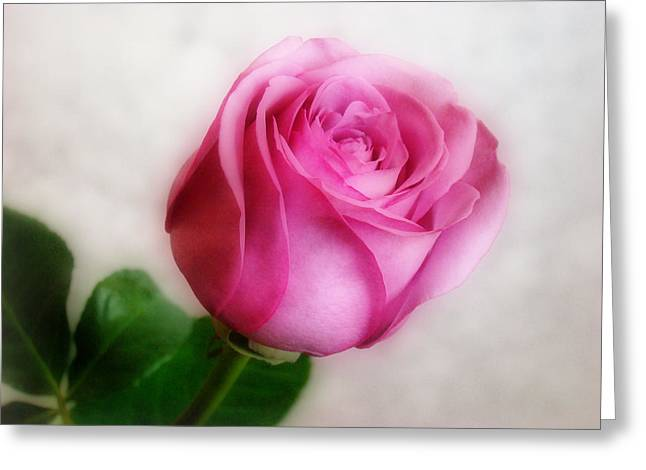 Indiana Roses Greeting Cards - In The Pink Greeting Card by Sandy Keeton