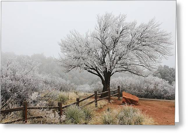 Split Rail Fence Greeting Cards - In the Quiet of the Fog 5 Greeting Card by Diane Alexander