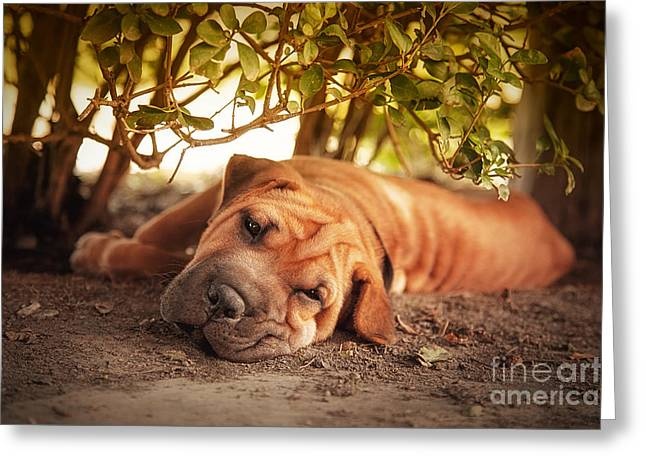 Pedigree Greeting Cards - In the shade Greeting Card by Jane Rix