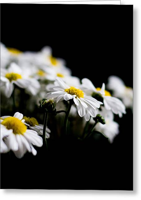 Small Flowers Greeting Cards - White Daisies Greeting Card by Shelby  Young