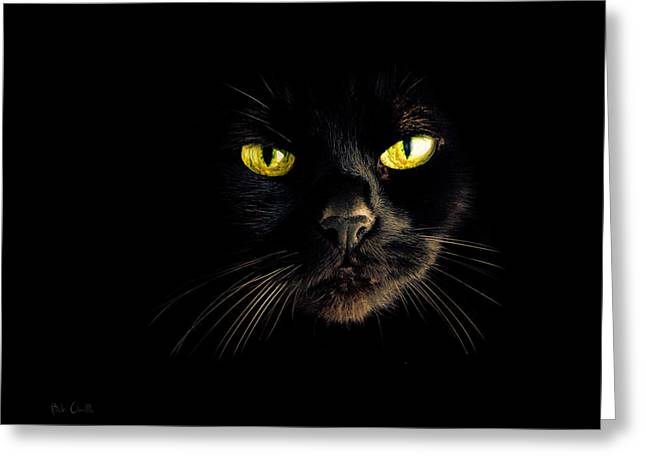 Drama Photographs Greeting Cards - In the shadows One Black Cat Greeting Card by Bob Orsillo