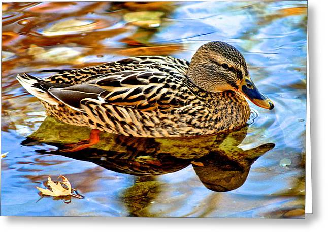Wing Mirror Greeting Cards - In the Shallows Greeting Card by Frozen in Time Fine Art Photography