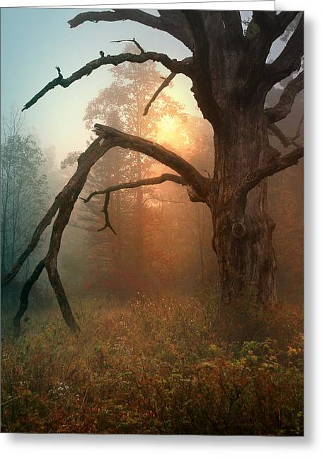Recently Sold -  - Eerie Greeting Cards - In the Stillness Greeting Card by Rob Blair