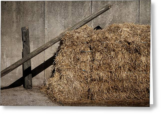 Hay Bales Greeting Cards - In The Sun Greeting Card by Odd Jeppesen