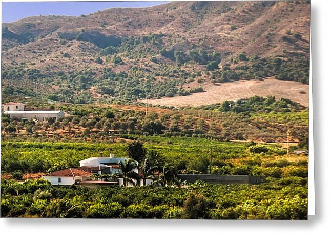 Vineyard Art Greeting Cards - In the Valley. Andalusia. Spain Greeting Card by Jenny Rainbow