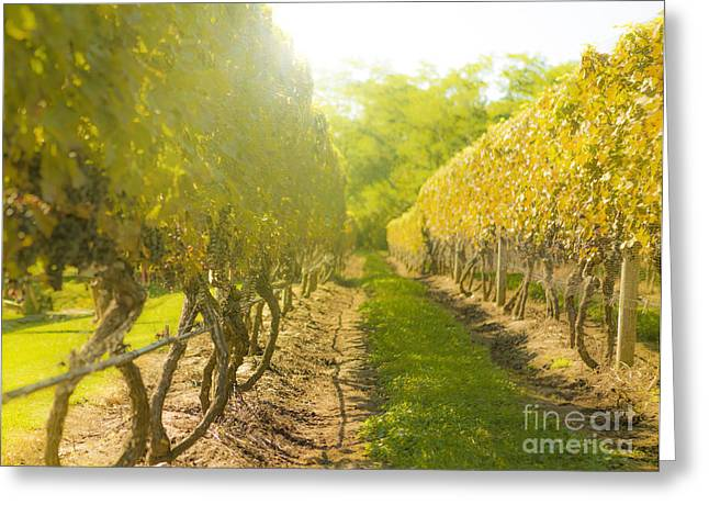 Winemaking Photographs Greeting Cards - In the Vineyard Greeting Card by Diane Diederich