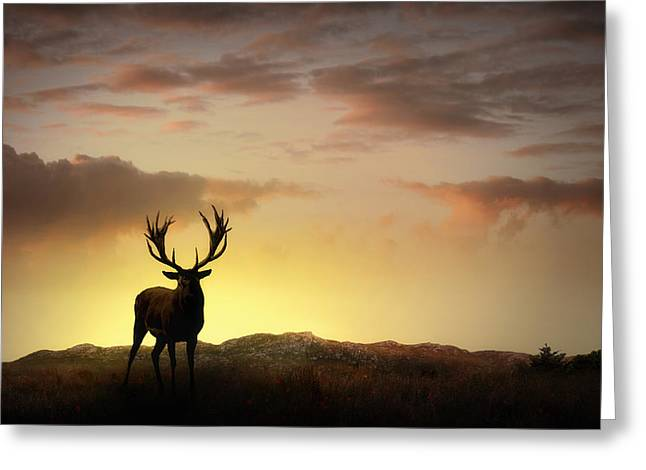 Red Deer Greeting Cards - In the Warmth of the Setting Sun Greeting Card by Jennifer Woodward