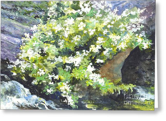 Rocks Drawings Greeting Cards - Spring In The Water Garden Greeting Card by Carol Wisniewski