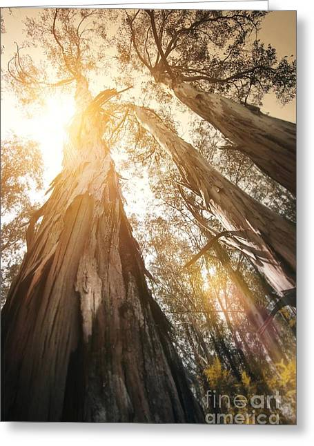 Glare Greeting Cards - In the Woods Greeting Card by Carlos Caetano