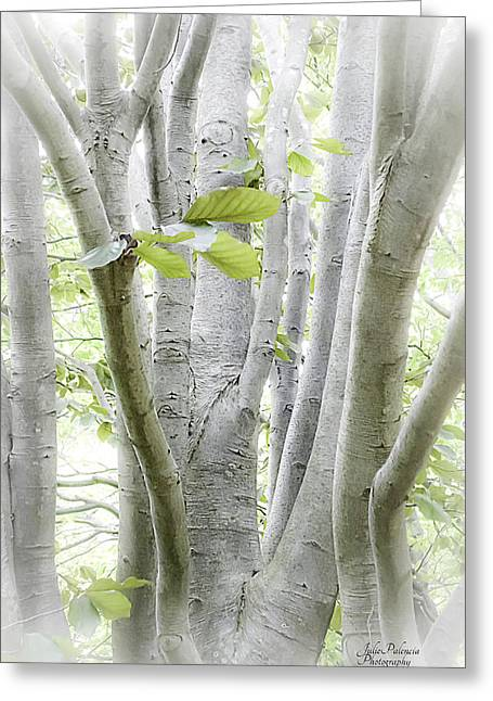 Outdoor Photography Digital Greeting Cards - In The Woods Greeting Card by Julie Palencia