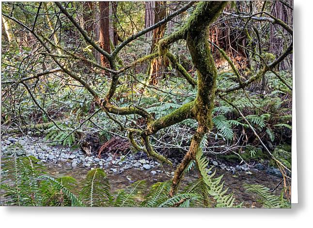 Marin County Greeting Cards - In the Woods Greeting Card by Kate Brown