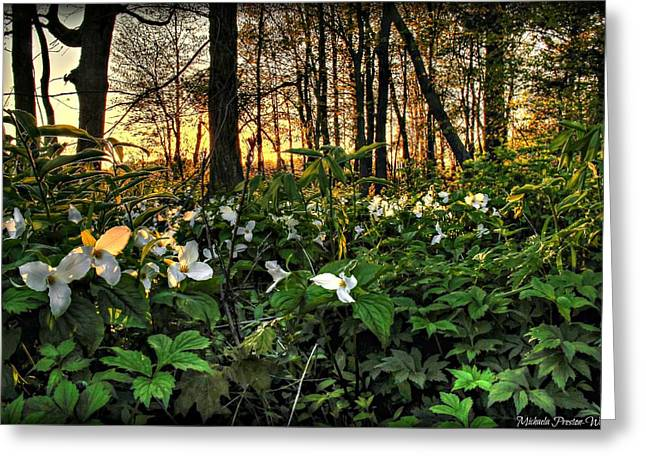 Michaela Preston Greeting Cards - In the Woods Greeting Card by Michaela Preston