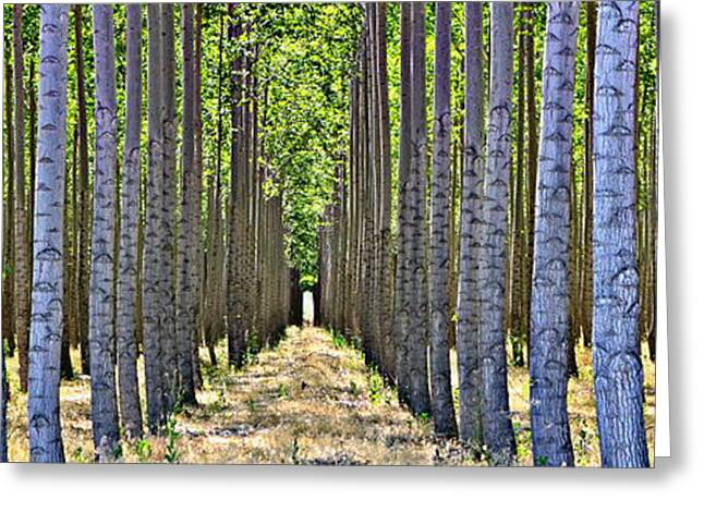 Abedules Greeting Cards - In the Woods Greeting Card by Michelle Calkins