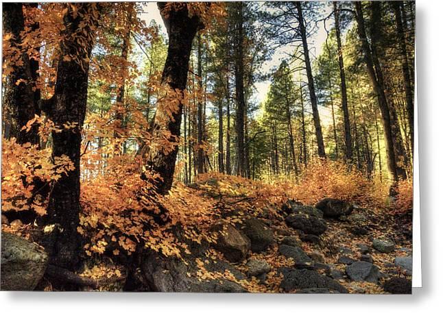 Oak Creek Greeting Cards - In The Woods  Greeting Card by Saija  Lehtonen