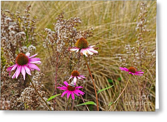 Abstracted Coneflowers Greeting Cards - In Their Last Days Greeting Card by Gary Richards