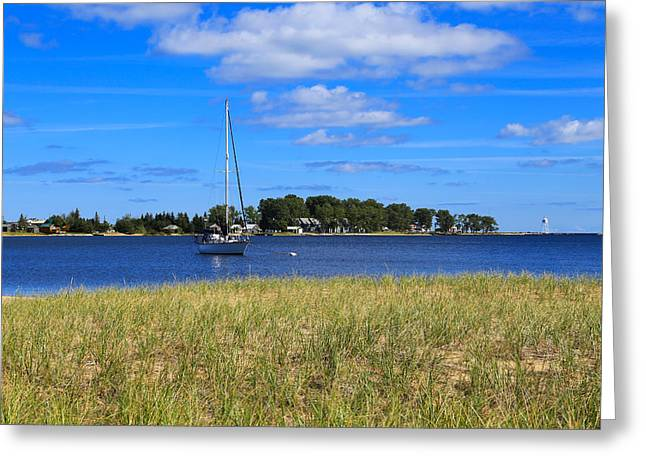 Sailboats In Harbor Greeting Cards - In Waiting Greeting Card by Rachel Cohen