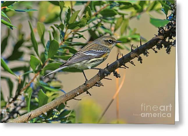 Warblers Greeting Cards - In With The Berries Greeting Card by Deborah Benoit