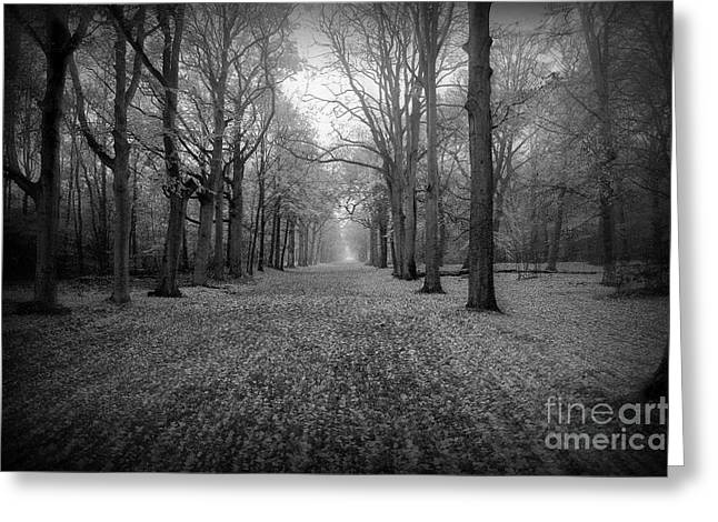 Emotions Digital Greeting Cards - In Your Darkest Hour Greeting Card by Photodream Art