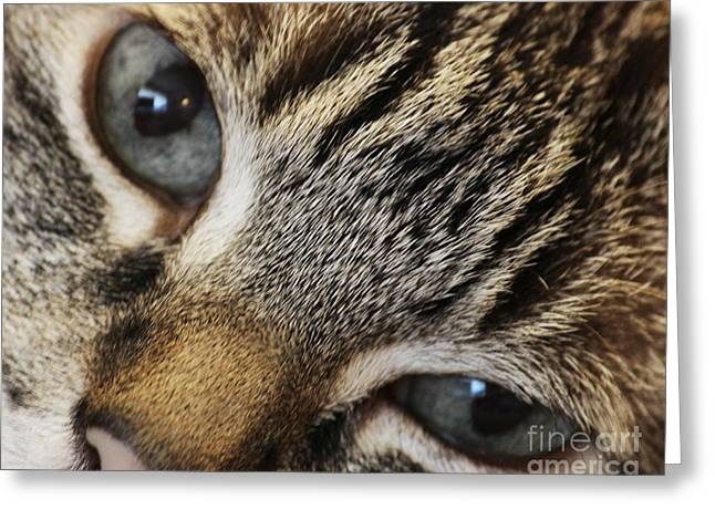 Shelter Kitty Greeting Cards - In Your Eyes Greeting Card by Jacqueline Barden