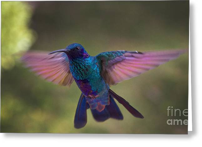 Iridescence Greeting Cards - In Your Face Buddy Greeting Card by Al Bourassa