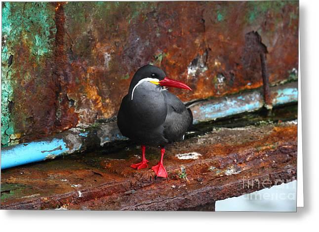Tern Greeting Cards - Inca Tern on Girder Greeting Card by James Brunker