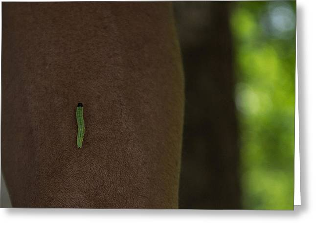 Lime Pyrography Greeting Cards - Inch Worm on My Arm Greeting Card by C Devon Brown