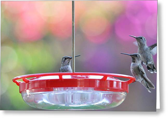 Migrating Hummingbird Greeting Cards - Incoming Greeting Card by Lynn Bauer