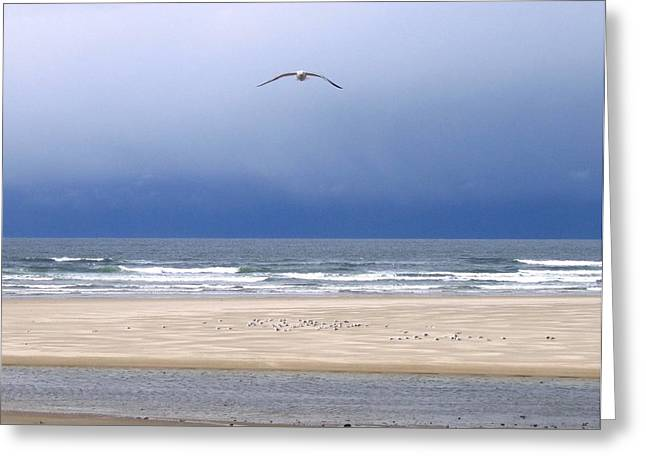 Dark Skies Greeting Cards - Incoming Seagull Greeting Card by Will Borden