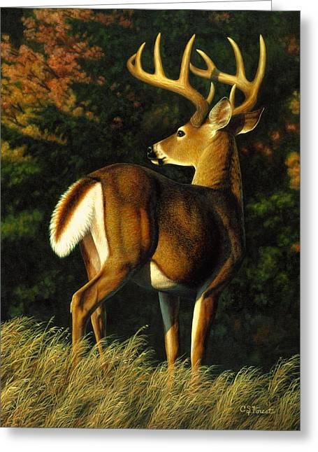 Whitetail Buck - Indecision Greeting Card by Crista Forest