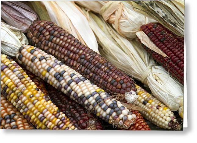 Corn Kernel Greeting Cards - Indian Corn 2 Greeting Card by Rebecca Cozart