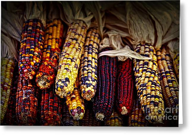 Corn Kernel Greeting Cards - Indian corn Greeting Card by Elena Elisseeva