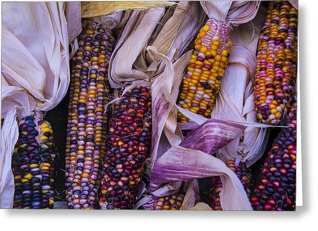 Ornamentation Greeting Cards - Indian Corn Harvest Greeting Card by Garry Gay