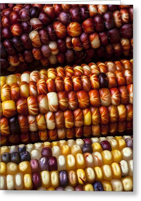 Husks Greeting Cards - Indian Corn Harvest Time Greeting Card by Garry Gay