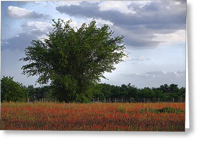Fence Pyrography Greeting Cards - Indian paint Brush Revisited Greeting Card by Linda Phelps