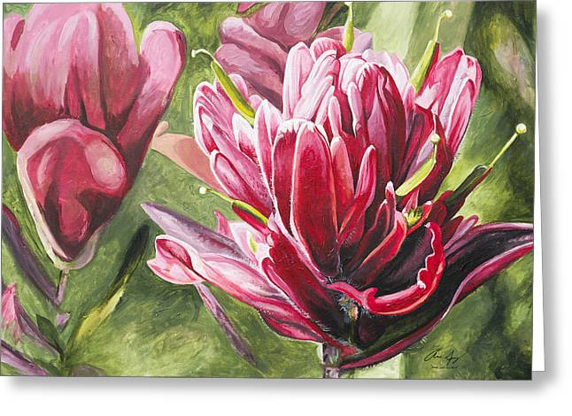 Red Flowers Greeting Cards - Indian Paintbrush Greeting Card by Aaron Spong