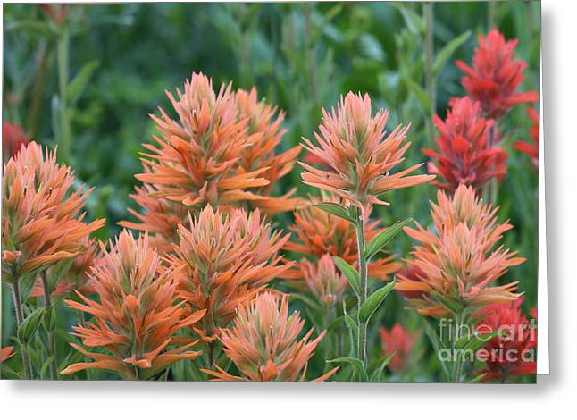 Little Cottonwood Canyon Greeting Cards - Indian Paintbrush Greeting Card by Marty Fancy
