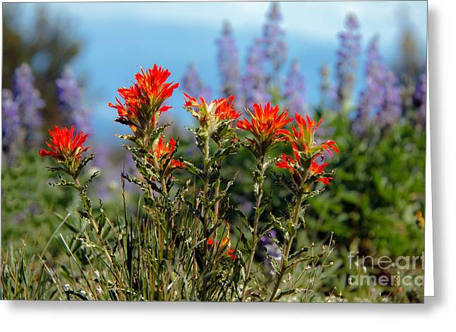Haybale Greeting Cards - Indian Paintbrush Greeting Card by Robert Bales
